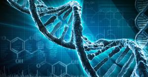По крови беременной женщины можно будет расшифровать геном будущего ребенка